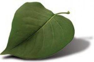 https://hostguatemala.net/wp-content/uploads/2019/07/green_leaf-300x200.jpg